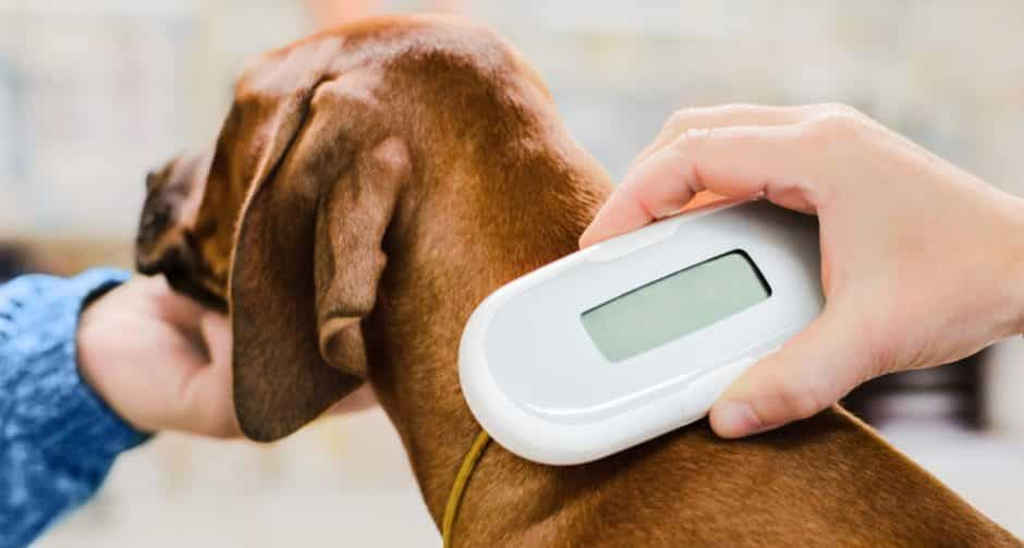 dogs must get microchip to enter europe